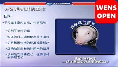 wensopen硕腾猪场巡检系列课程—开始进猪时的准备工作