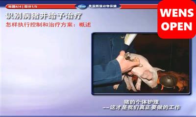 wensopen硕腾猪场巡检系列课程—识别病猪并给予治疗