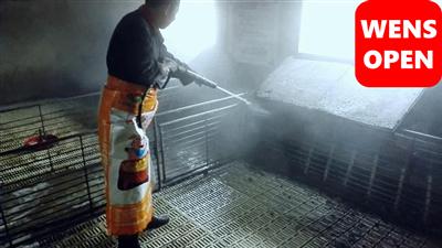 wensopen高效泡沫型猪舍清洗消毒剂