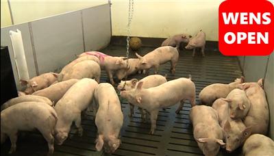 wensopen全漏缝地板-通风和猪舍设备(中文字幕)