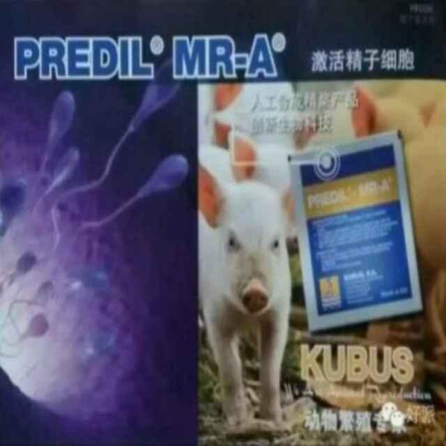 昆明泓建泰生物科技--专注种猪繁殖