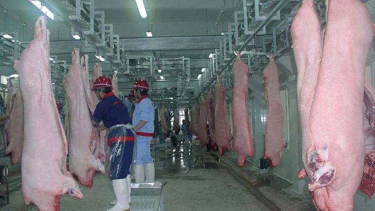 生猪屠宰常见疫病及处理办法