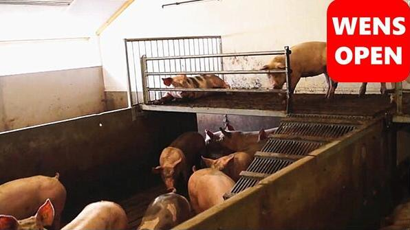 wensopen-复式猪栏