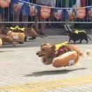 奔跑的热狗