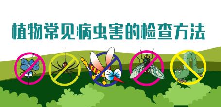 植物病虫害防治方法——植物常见病虫害的检查方法