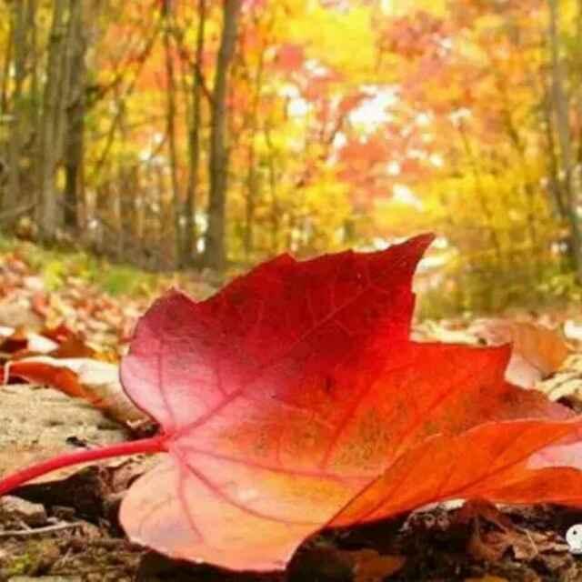 秋天、、红叶