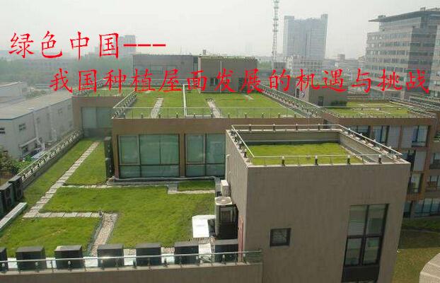 绿色中国--我国种植屋面发展的机遇与挑战