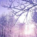 希望-雪压青松